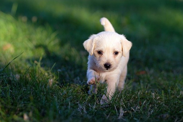 štěňátko v trávě
